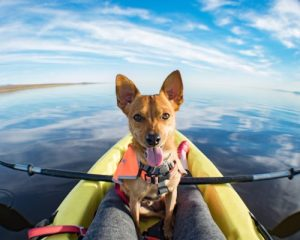 dog friendly kayaks in 2019