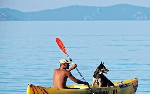 Stability of Kayak Suitable for Dogs