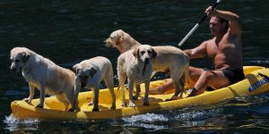 How to choose best dog-friendly kayak