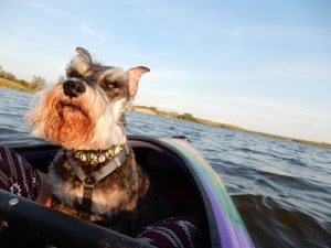 Size of Dog-Friendly Kayak in 2019