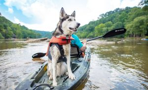 Frequently asked questions about kayaks for dogs