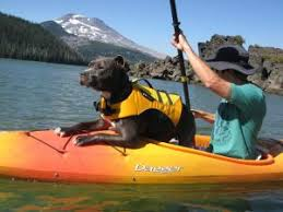 What kayaking gear is necessary for your dog? in 2019